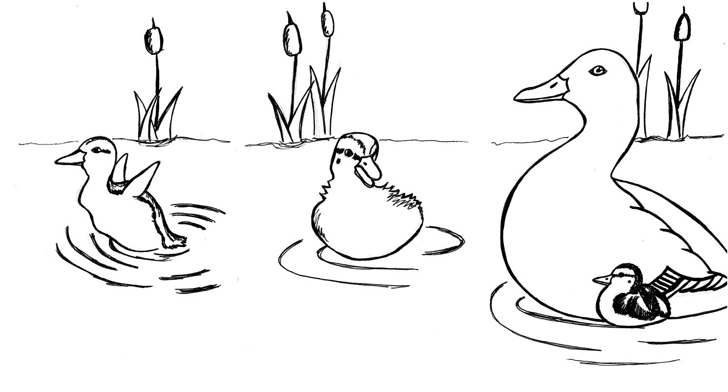 duck and ducklings drawing
