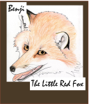 Benji, the little red fox