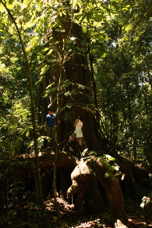 I'm the one in white, for scale, on a beautiful rainforest tree in Corcovado national park.