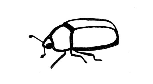 Simple insect and flower line drawings | standingoutinmyfield