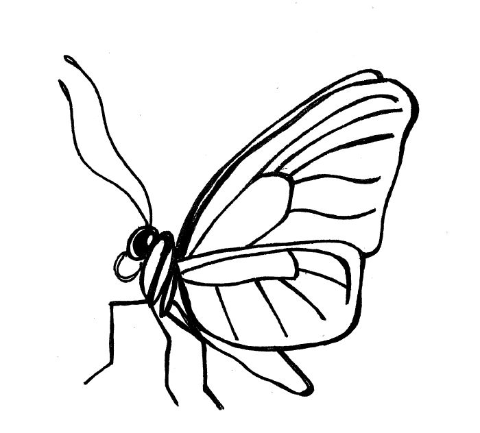 Line Drawing Of Butterfly : Simple insect and flower line drawings standingoutinmyfield
