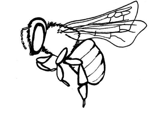 honeybeeline