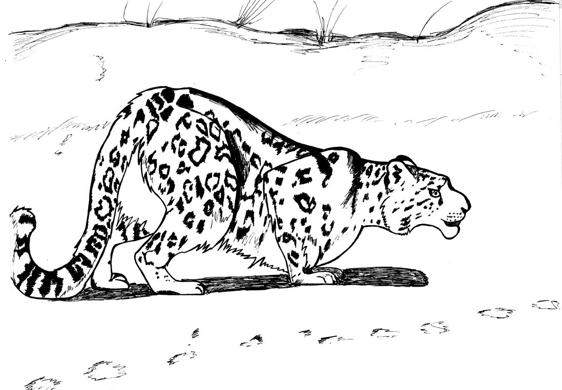 Snow Leopard Cubs Coloring Pages Coloring Pages Snow Leopard Coloring Pages