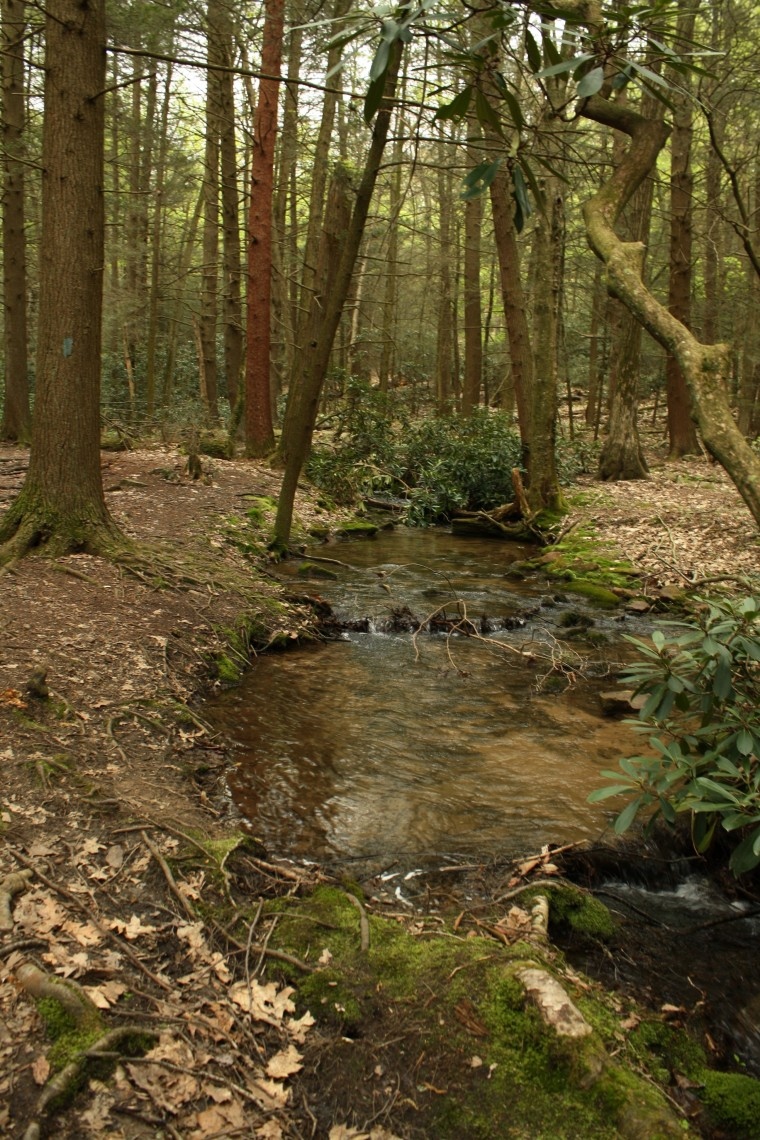 This stream is a good place to find salamanders and crayfish!
