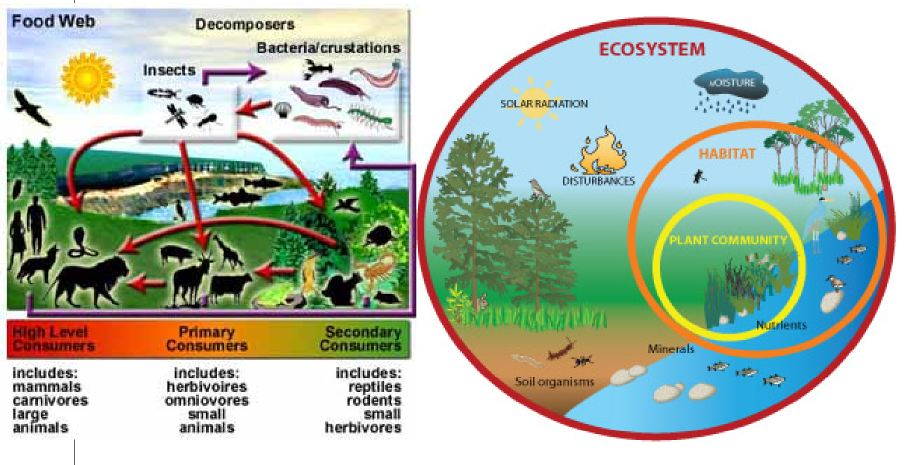 the meaning of ecology and ecosystems essay Read this essay on balancing ecosystems it forms the basic functional unit of ecology grass carp are known as an invasive species meaning it is a non-native.