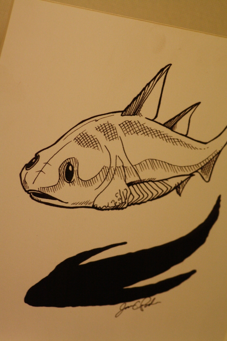 I love these drawings by Jason Poole.  This one is a Gyracanthides murrayi.
