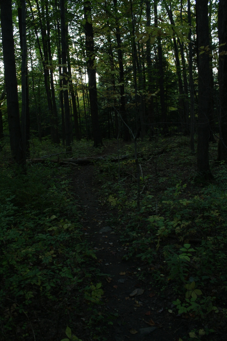 The forest is dark and quiet