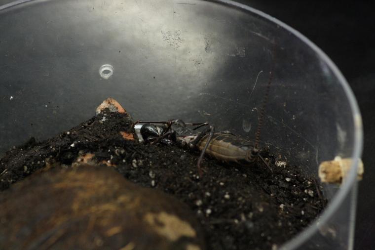 A whip scorpion