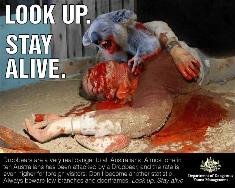 Drop bear warning, source