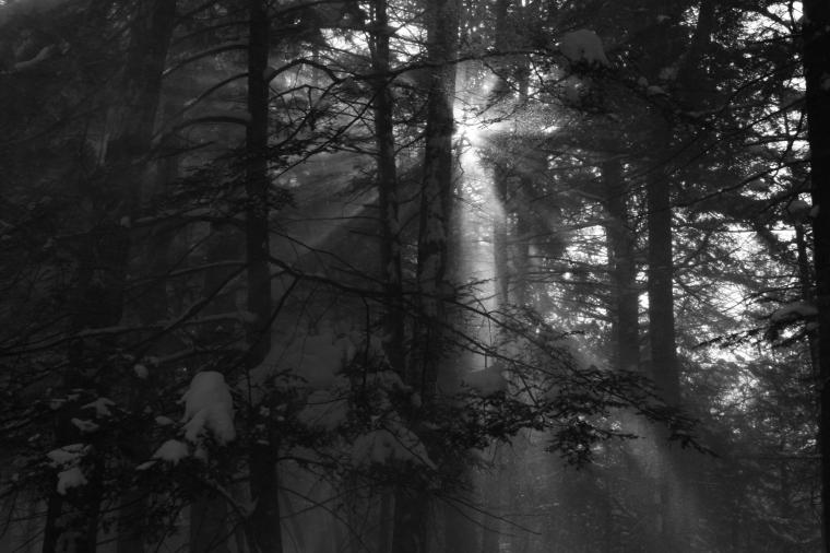 bwforest