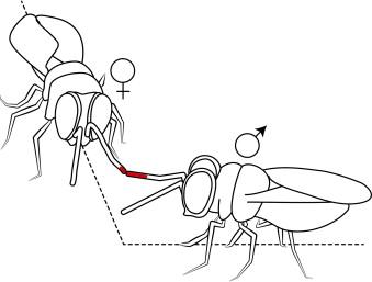 Fig 2 from Ablard et al 2013