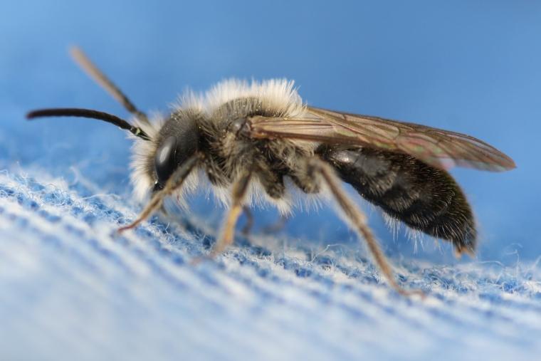 bee on my shirt