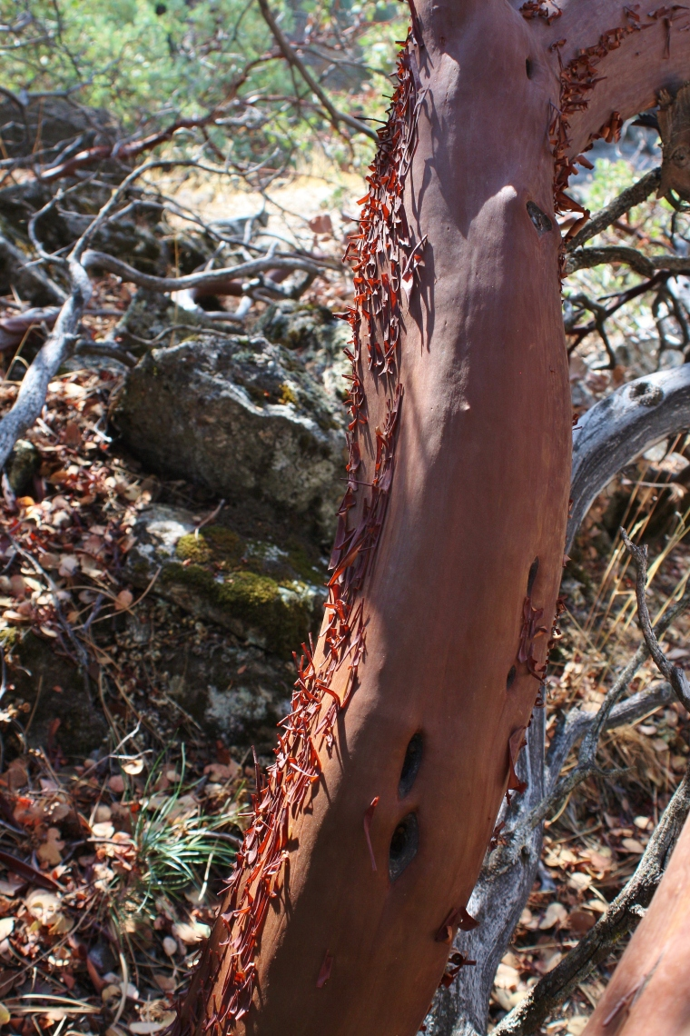 it has peely red bark