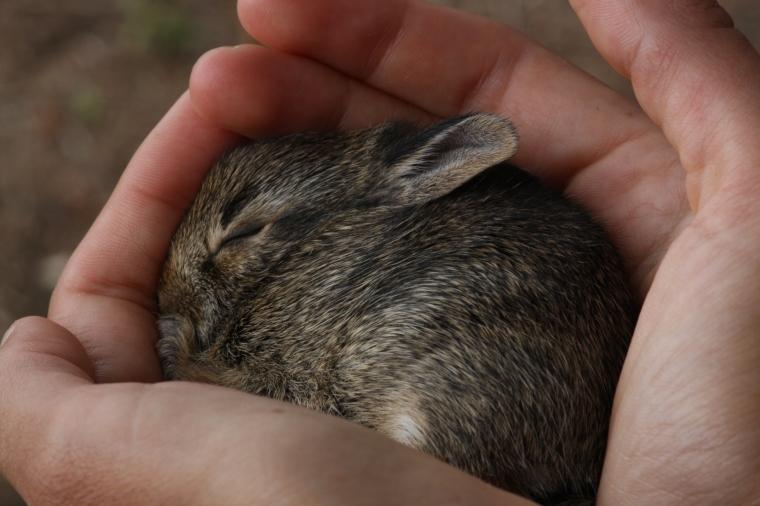In my hands, he fell right asleep, haha