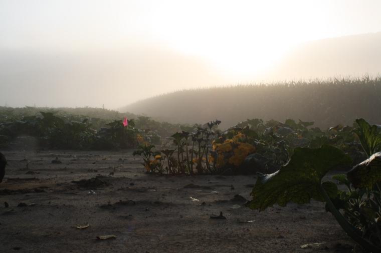 Sunrise burning off the mist