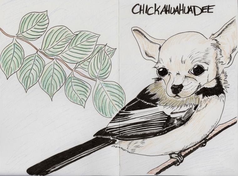 Chickahuahuadee